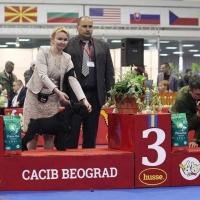 cacib belgrade_1