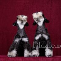 10gallery fildale_4