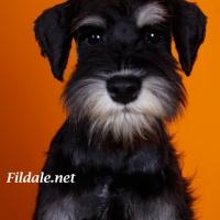 10gallery fildale_5