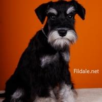 10gallery fildale_6