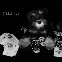10gallery fildale_7