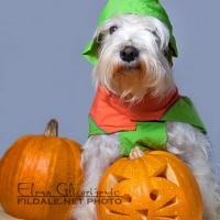 dog with trick or treat pumpkin