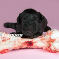 cute puppy 2 weeks with bone
