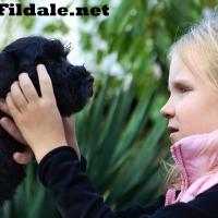 6gallery fildale_03