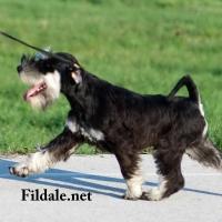 6gallery fildale_18