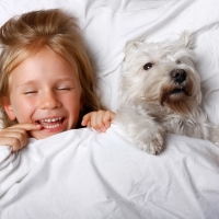 beautiful blonde little girl laughing and lying with white schnauzer puppy dog on white bed. Friendship concept.