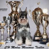 Modus Maximus Tsaller_10
